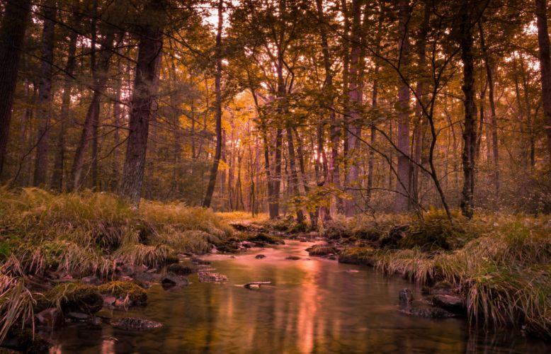 cauce rio bosque arboles naturaleza wallpaper