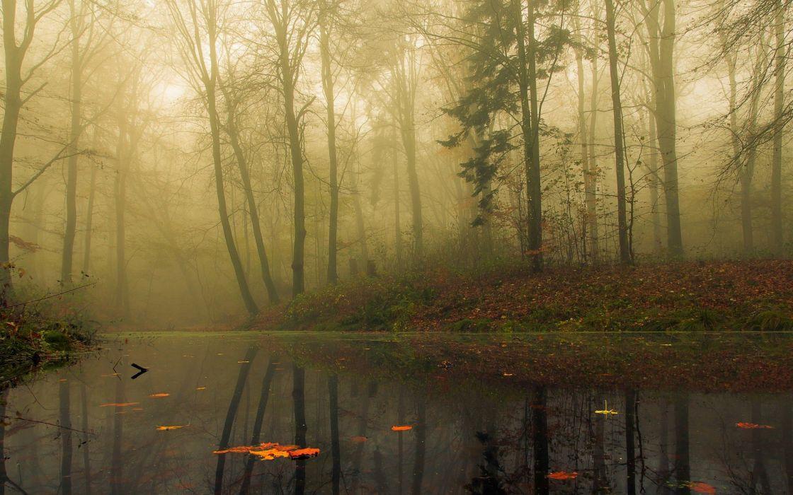 fog lake forest autumn nature beauty mist landscape wallpaper