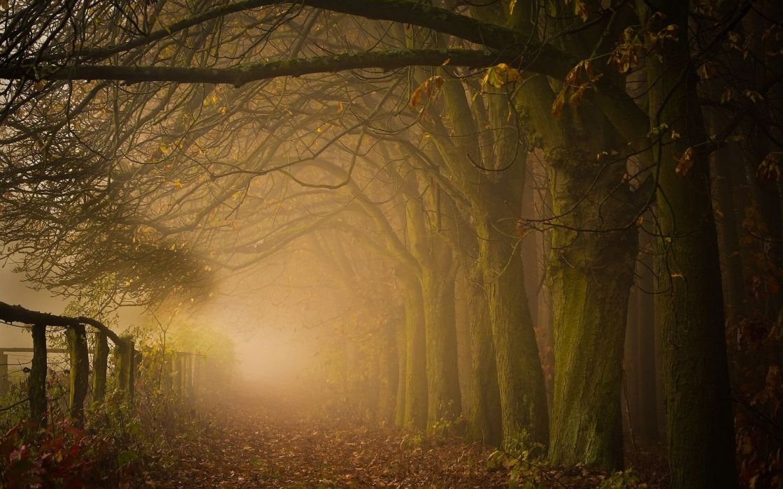 fog road forest autumn nature beauty mist landscape wallpaper