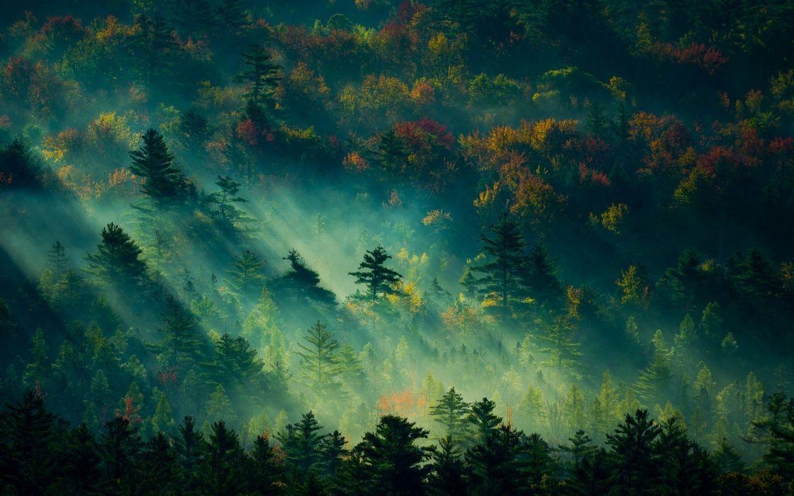 fog tree forest autumn nature beauty mist landscape wallpaper