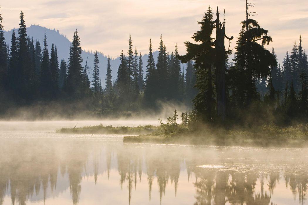 fog tree forest autumn nature beauty mist landscape lake mountain wallpaper