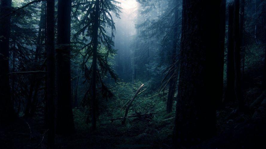 fog tree forest nature beauty mist landscape wallpaper