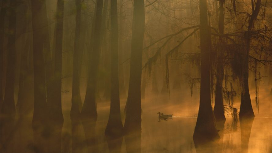 fog autumn tree forest nature beauty mist landscape duck lake wallpaper