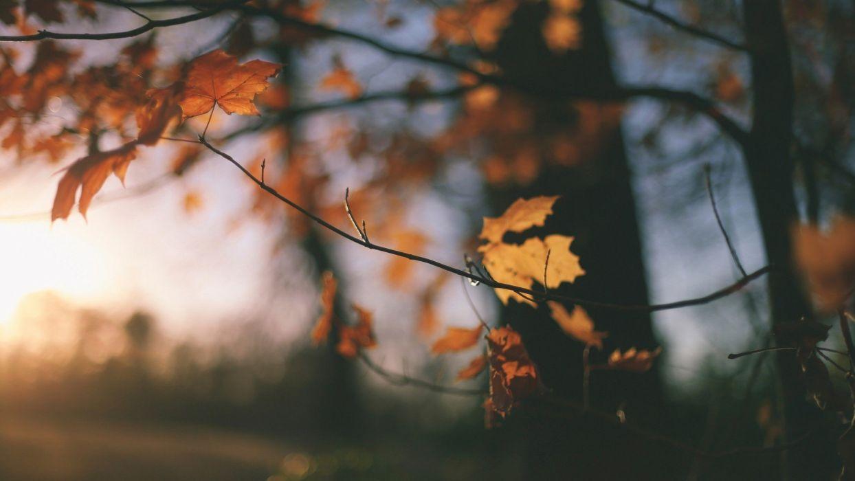 tree autumn leaves wallpaper