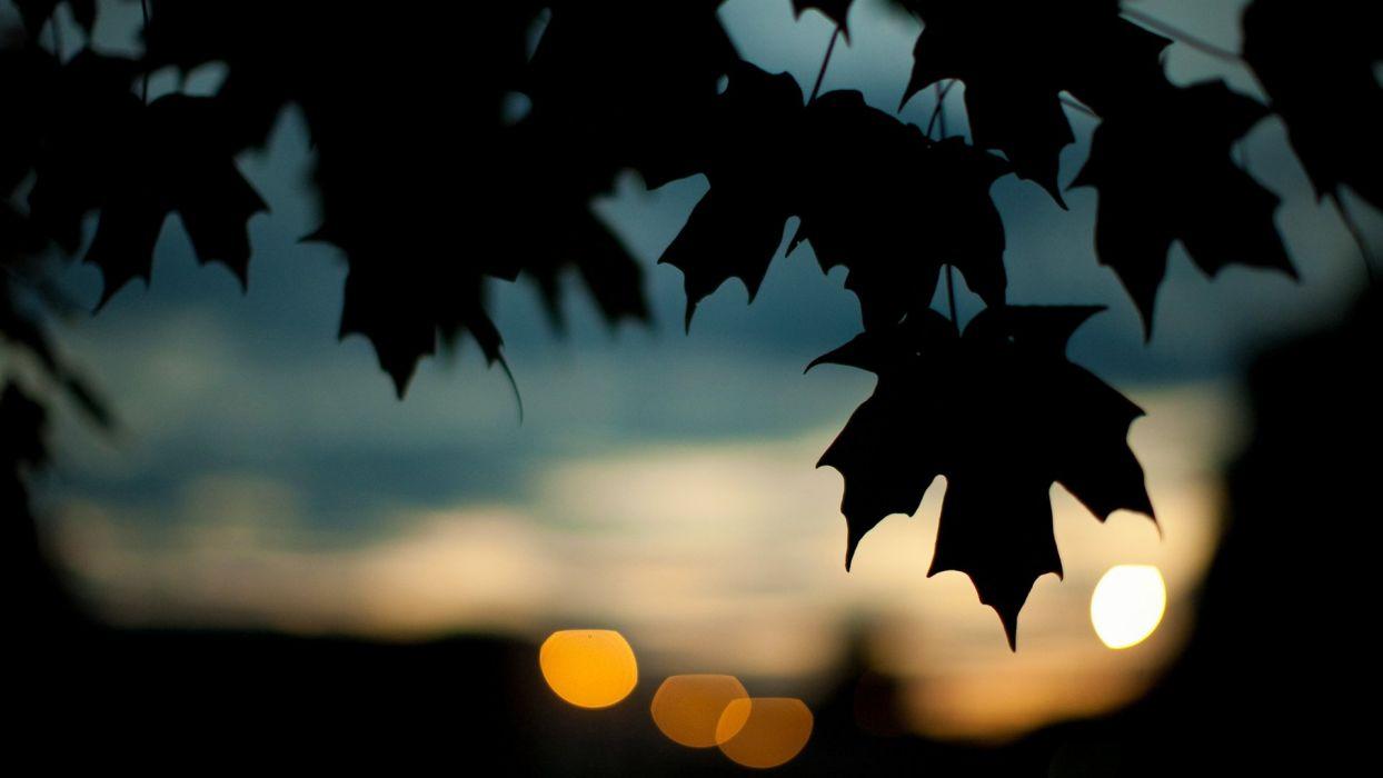 trees leaves silhouette plants bokeh maple leaf wallpaper