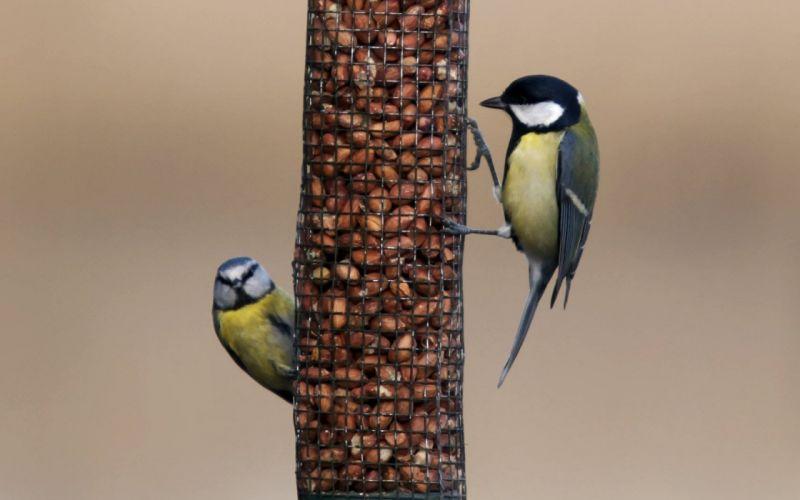 nature birds animals cute wallpaper