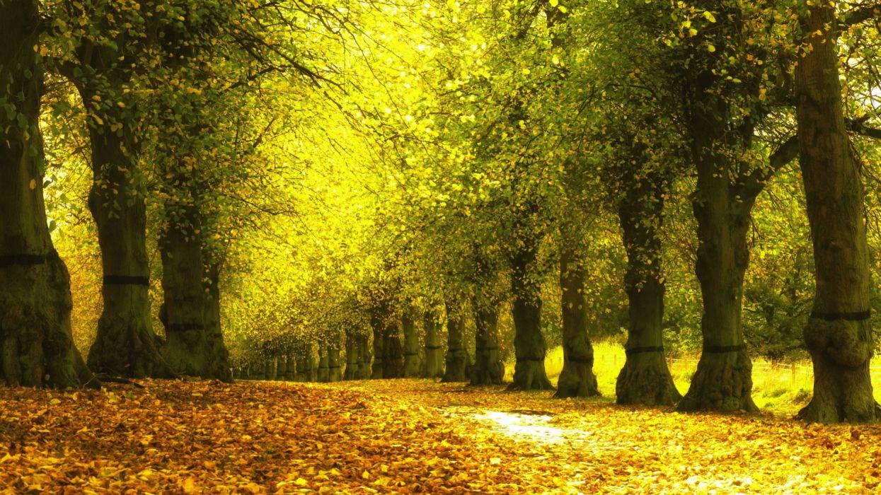arboles bosque hojas naturaleza wallpaper