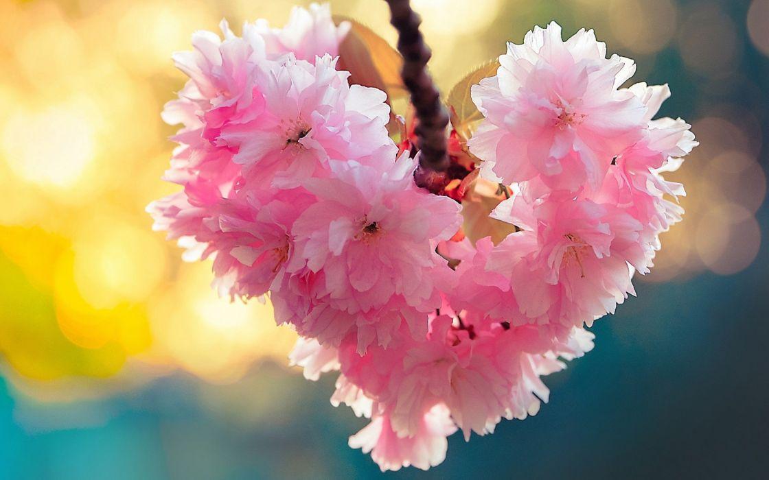 Heart bloom love heart flowers nature spring wallpaper