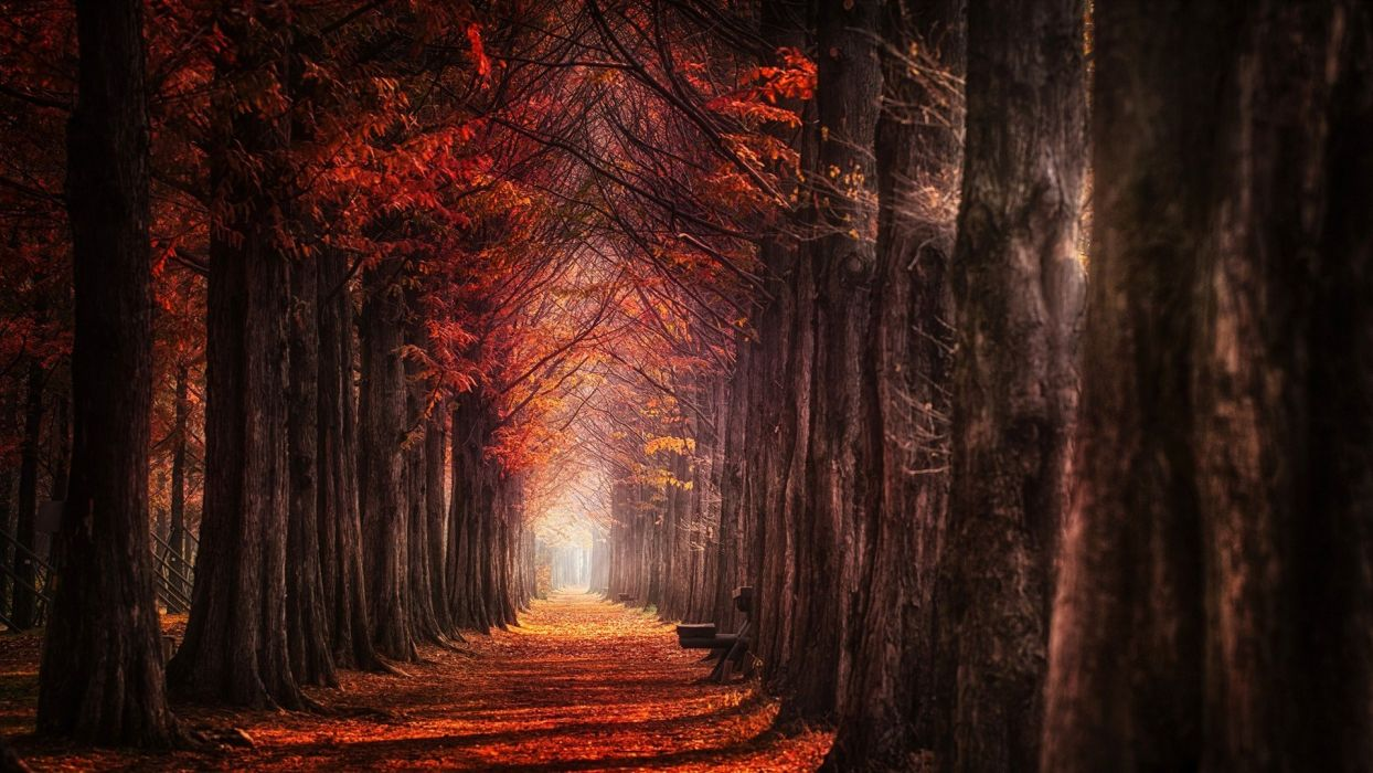 landscape nature fall red path daylight leaves trees wallpaper