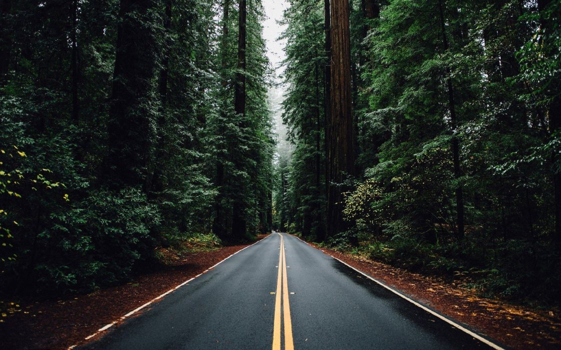 nature forest trees road wallpaper