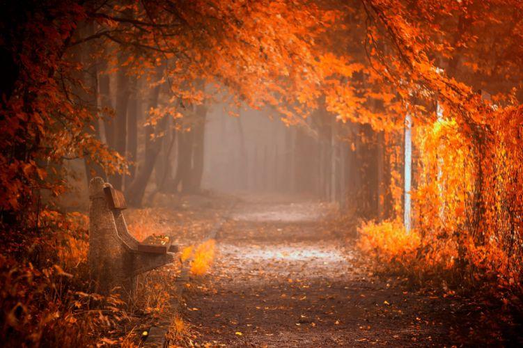 splendor leaves bench nature forest fall autumn path autumn splendor woods road wallpaper