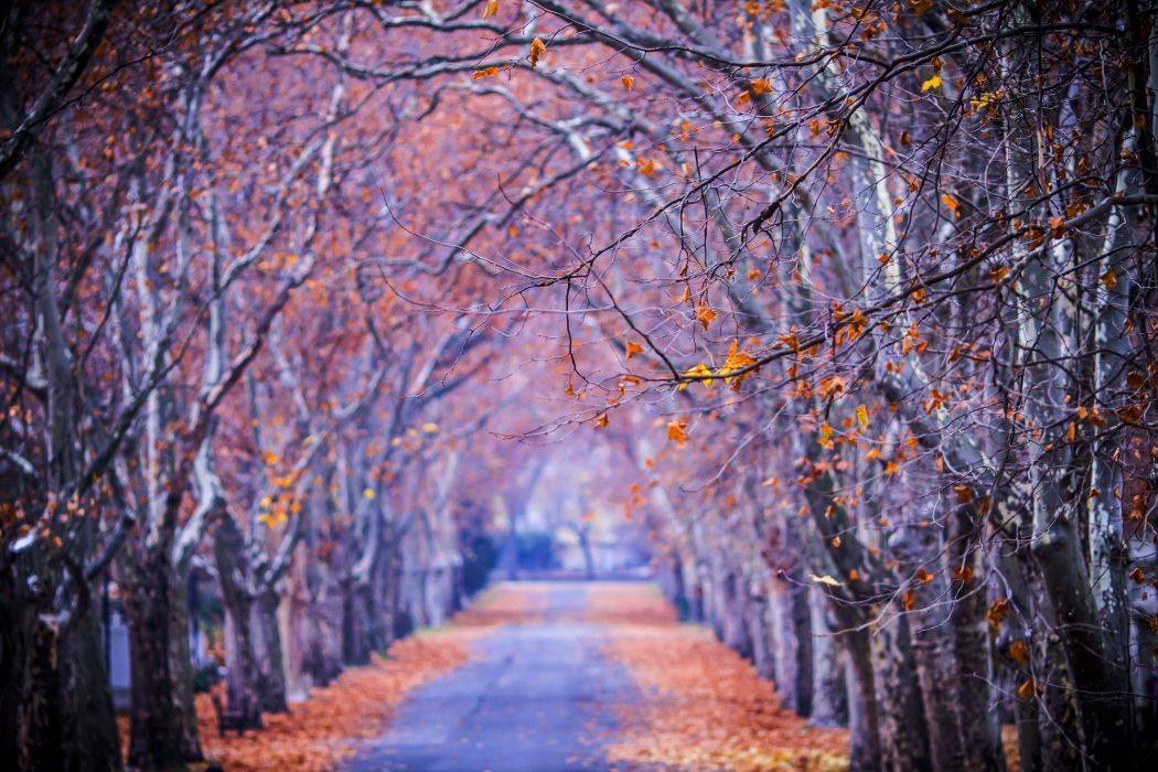 leaves colors nature fall trees path walk splendor park forest road colorful autumn wallpaper