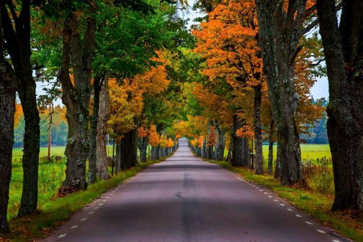 trees forest walk fall nature leaves path autumn splendor autumn road colorful colors park wallpaper