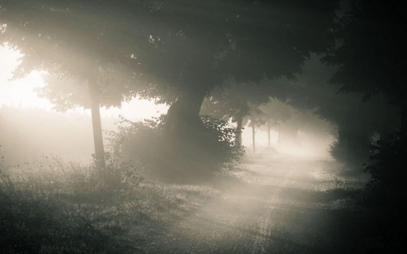 landscapes nature trees road fog wallpaper