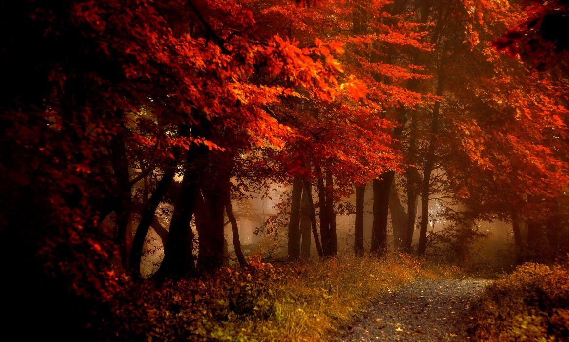 fall splendor autumn leaves bench nature forest path autumn splendor woods road wallpaper
