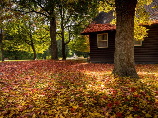 walk nature park bench leaves colorful house trees forest colors autumn splendor fall autumn wallpaper