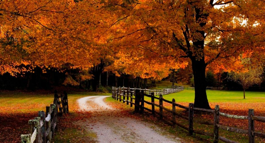 road fall leaves meadows grass orange beautiful forest trees fences autumn wallpaper