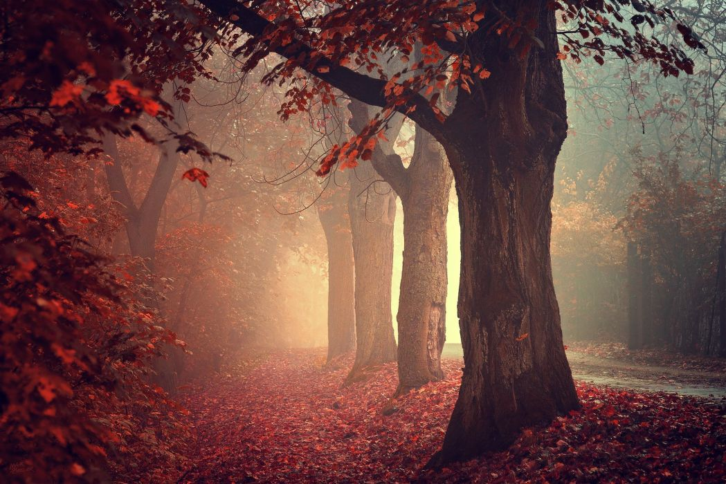 road mist red leaves trees autumn beautiful fall wallpaper