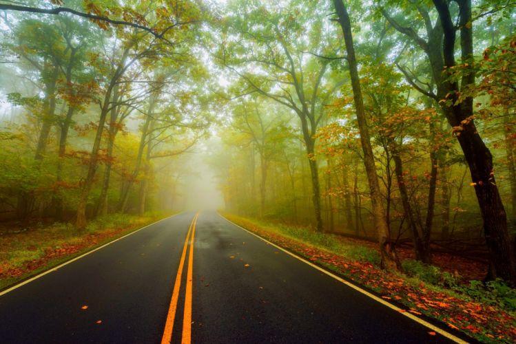 autumn splendor fall walk colors nature park path leaves autumn road colorful forest trees wallpaper