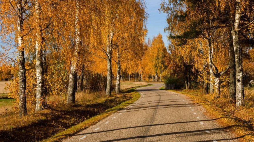 path leaves trees colors autumn splendor fall walk nature park autumn road colorful forest wallpaper