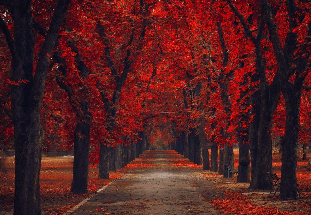 leaves nature Alley road walk park path trees bench autumn autumn splendor fsll wallpaper