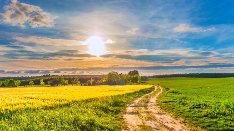 trees sky blue yellow field beautiful white green grass clouds Sun wildflowers springtime road wallpaper