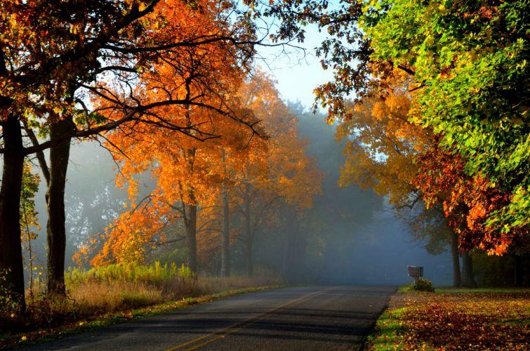 nature fall road leaves autumn splendor trees autumn wallpaper