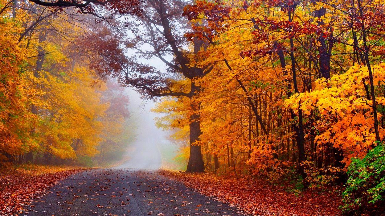 Image result for fall splendor