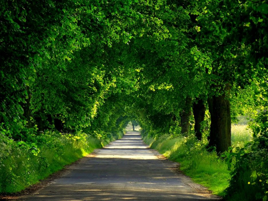 forest road spring walk park path nature trees wallpaper
