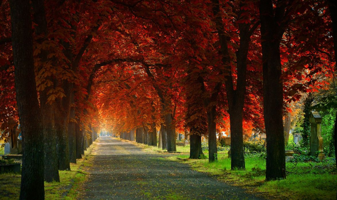 leaves Grove cemetery beautiful trees road natural arch grass autumn wallpaper