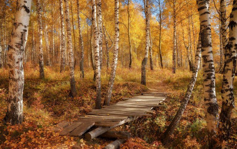 autumn splendor autum leaves forest nature fall trees path walk colors road colorful park wallpaper