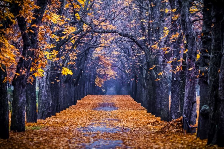 autumn colorful road colors walk path trees fall nature forest park autumn splendor leaves wallpaper