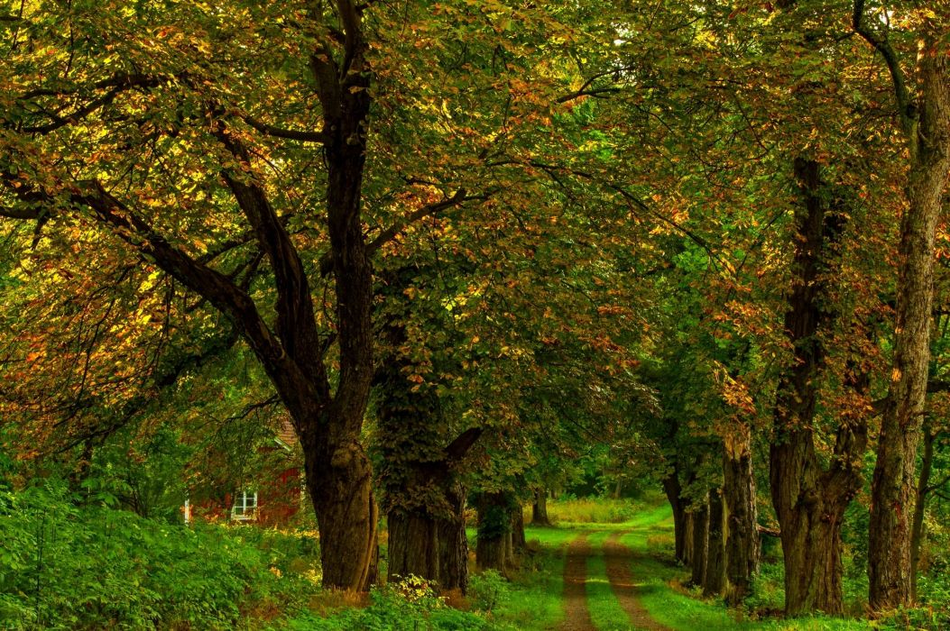 autumn colorful road colors walk path fall trees nature forest park autumn splendor leaves wallpaper