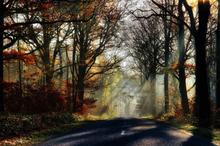 leaves park rays forest nature fall trees sunrays path walk colors splendor road colorful autumn wallpaper