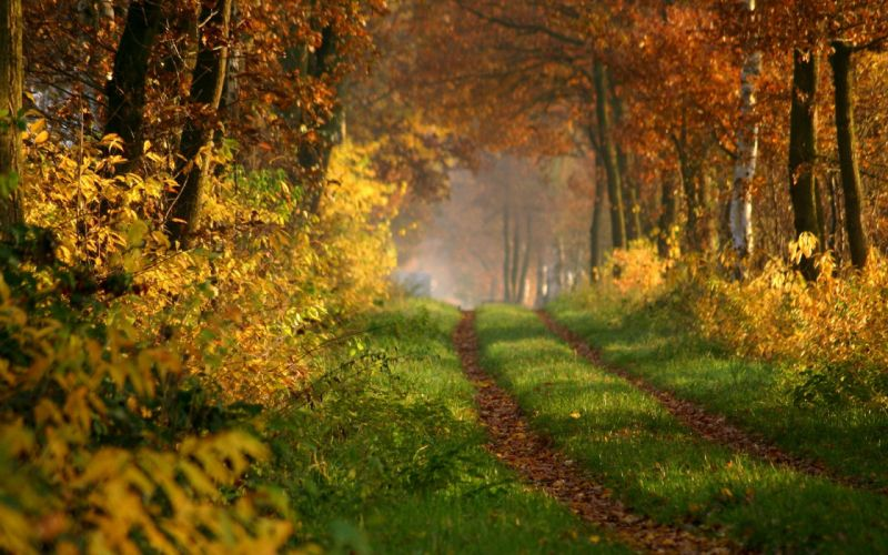 road forest autumn nature wallpaper