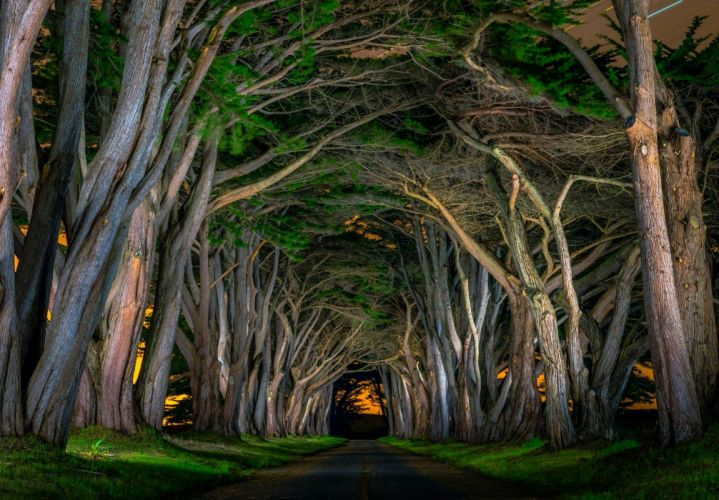 beautiful avenue grass natural arch road trees Nocturnal wallpaper