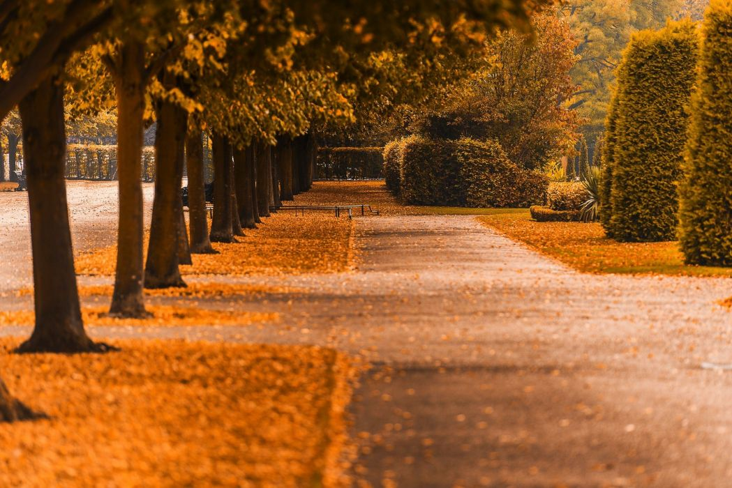 nature fall trees path walk colors road colorful autumn leaves autumn splendor park forest wallpaper