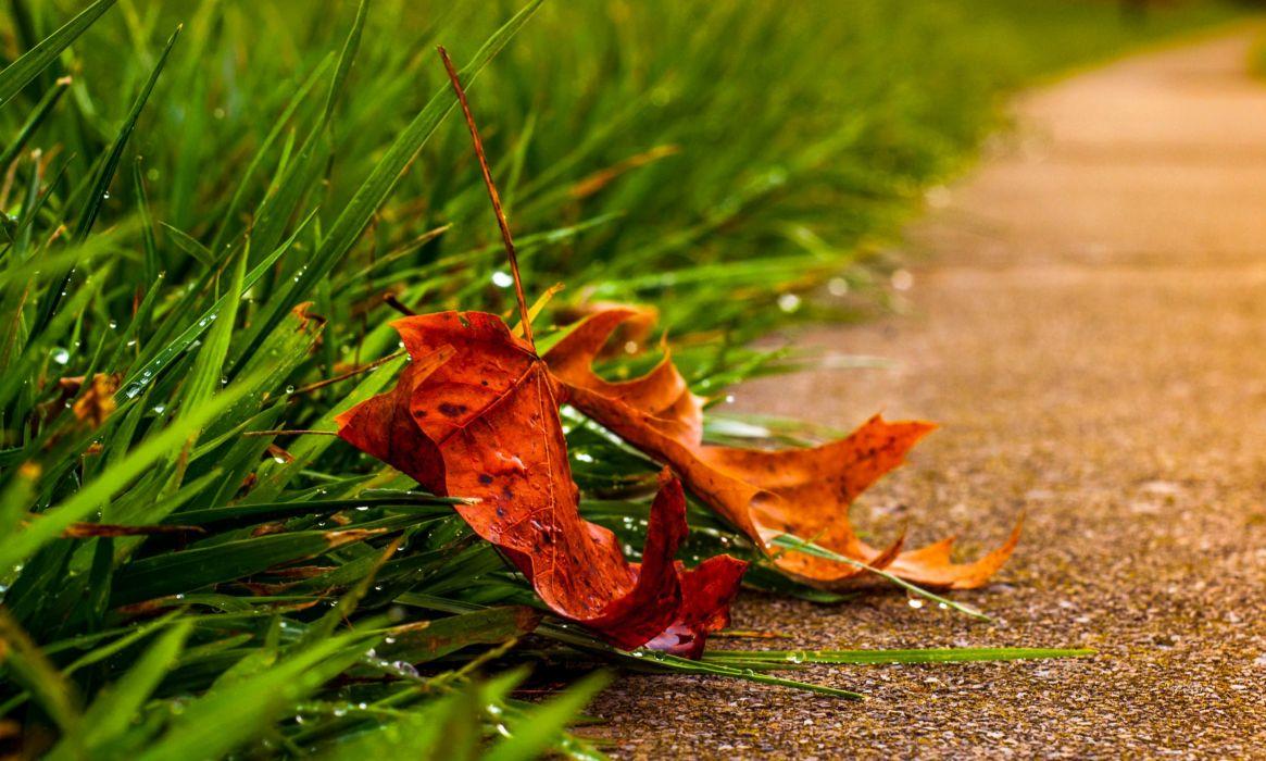 splendor road autumn leaves leaf nature fall path Autumn leaves wallpaper