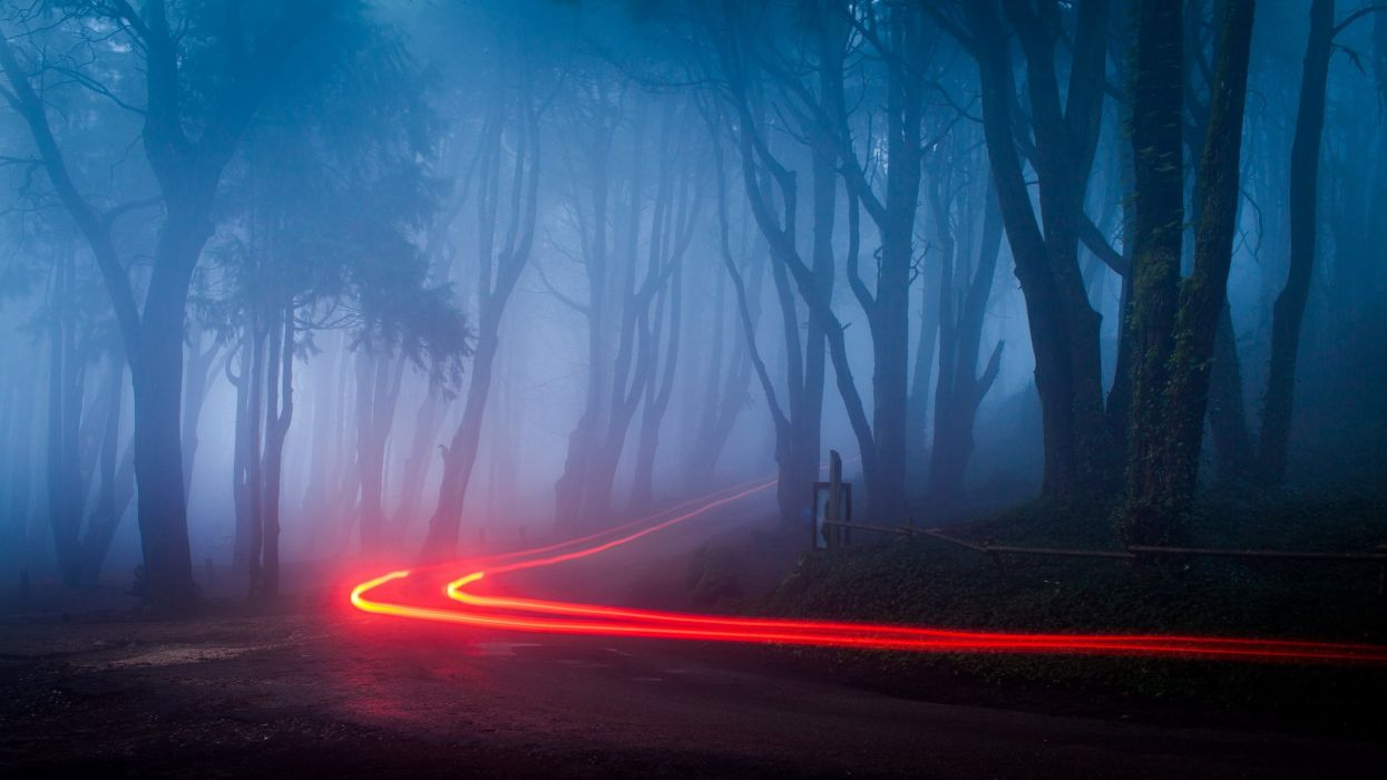 forest light blue road nature trees woods wallpaper