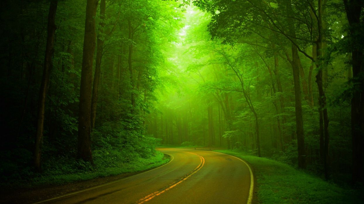 trees wal forest nature path splendor road green park spring woods wallpaper