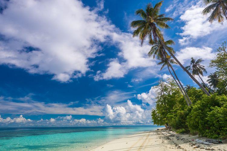 beach shrubs palm trees island paradise clouds tropical beautiful white sand summer travel Malaysia ocean wallpaper