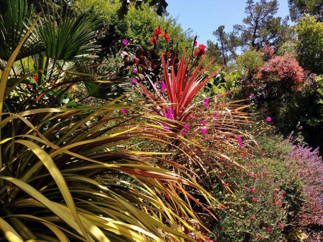 GARDEN nature landscape plants flowers flower landscaping wallpaper