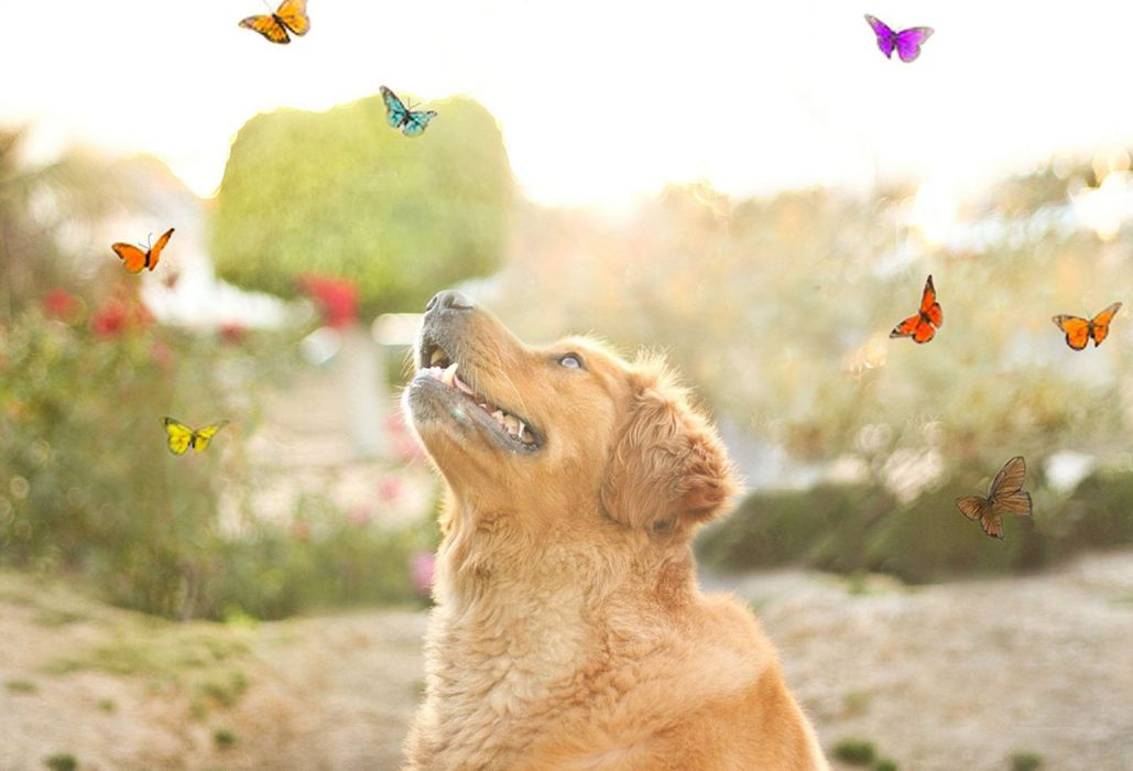 cute animal dog butterfly wallpaper