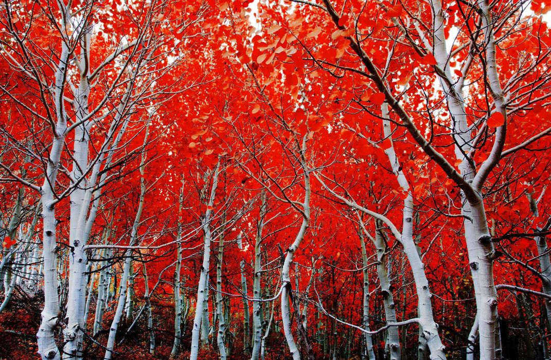 beauty nature landscape tree red forest wallpaper