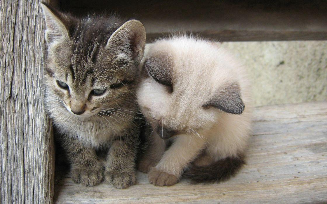 Kittens White Black Kids Cute Cats Wallpaper 1920x1200 982372 Wallpaperup