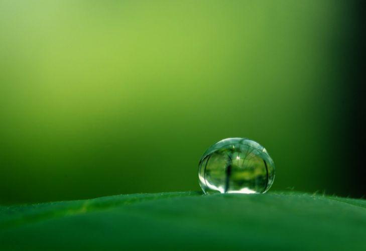 green nature beauty water drop wallpaper