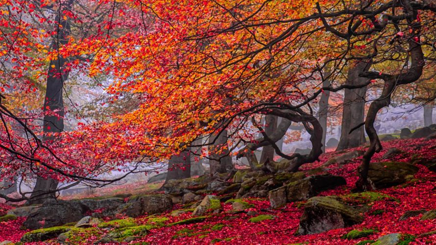 curves red rocks yellow trees leaves autumn wallpaper