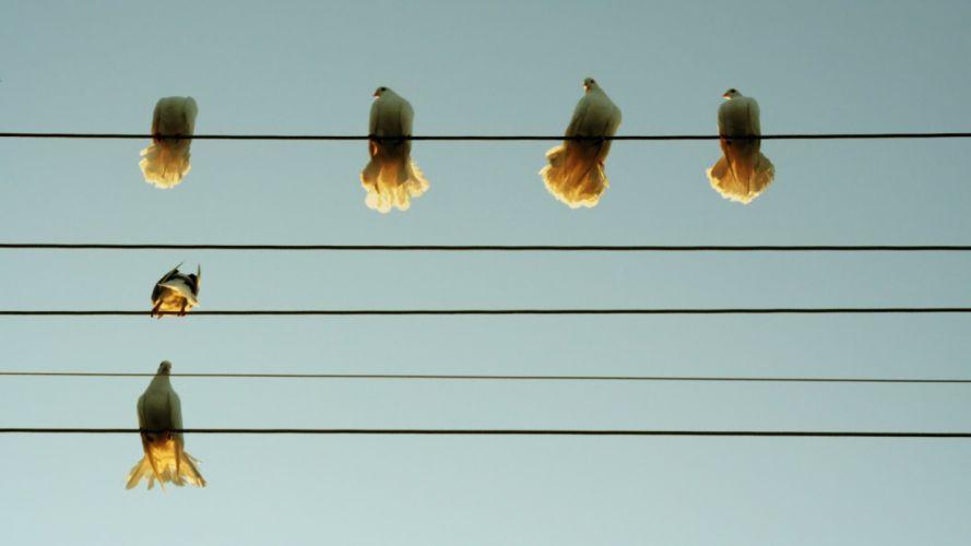 music wire Pigeons animal birds cute beauty wallpaper