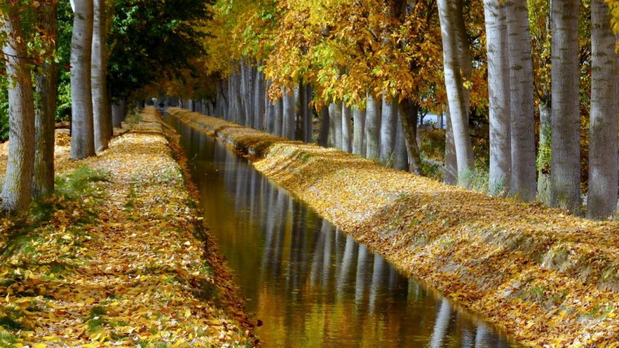nature autumn channel beauty trees forest wallpaper