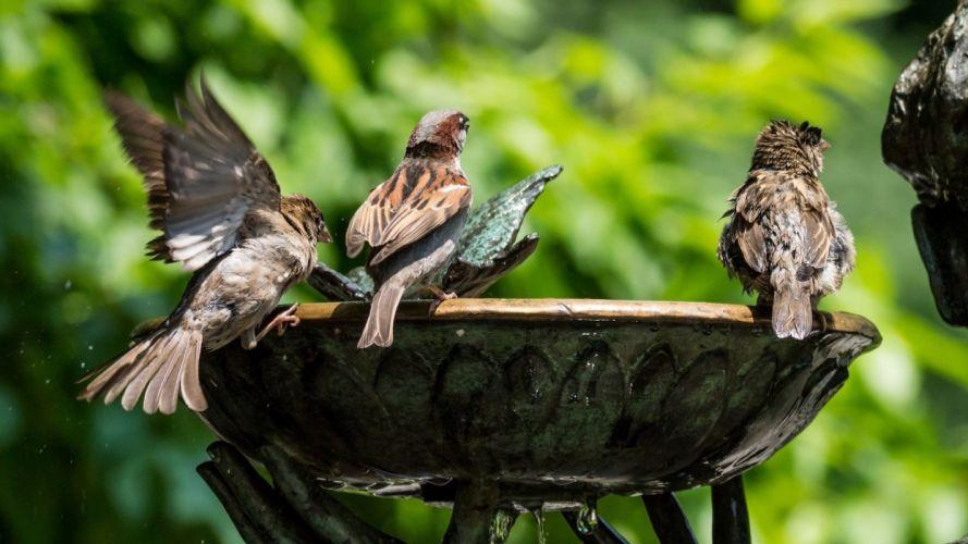 water fountain birds sparrows green wallpaper